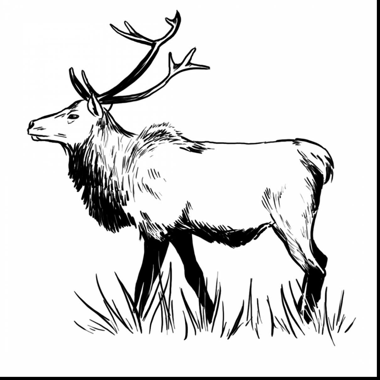 1210x1210 Good Coloring Pages Elk Drawing With Moose Coloring Pages