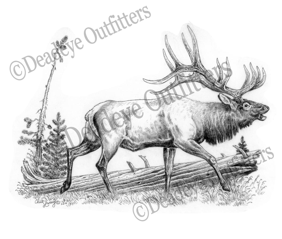 Bull Elk Drawing at GetDrawings.com | Free for personal use Bull Elk ...