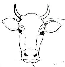 220x229 Image Result For Step By Step Cow Drawing Face My Cow