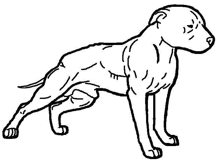 698x516 Awesome Drawings Of Pit Bulls Tags Drawings Of Pit Bulls How