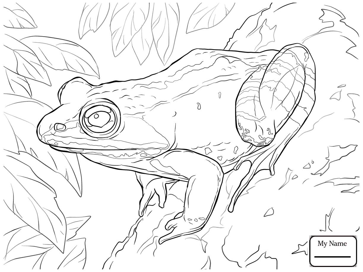 1223x917 Amphibian Adult Male American Bullfrog Coloring Pages For Kids