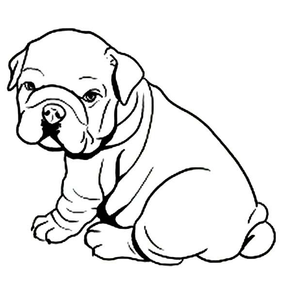 600x600 Coloring Pages For Girls Puppyes Bull Dogs To Tiny Draw Image