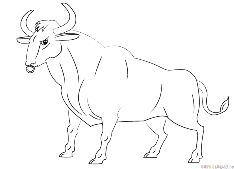 797x575 How To Draw A Cartoon Bull Step By Step. Drawing Tutorials