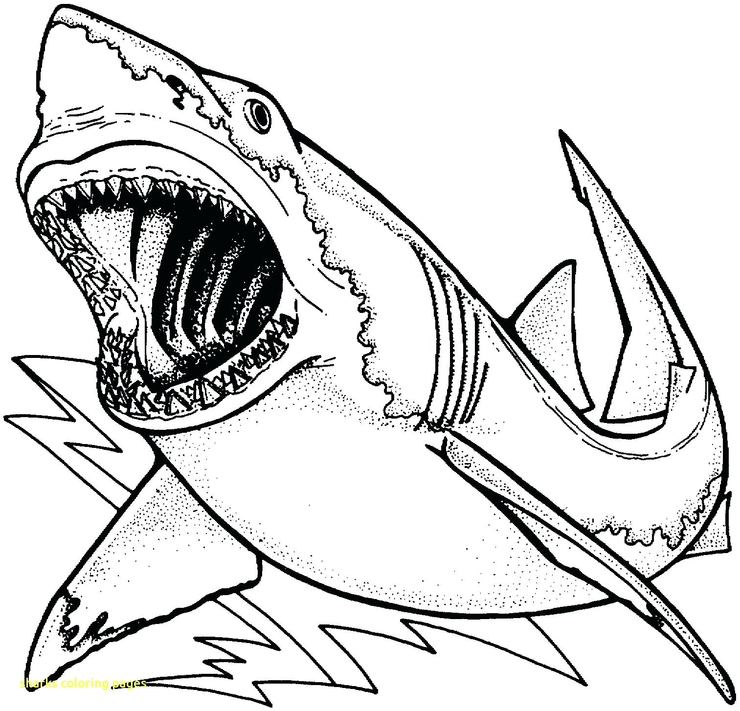1513x1454 Coloring Shark Printable Coloring Pages Bull Line Drawing 3 Free