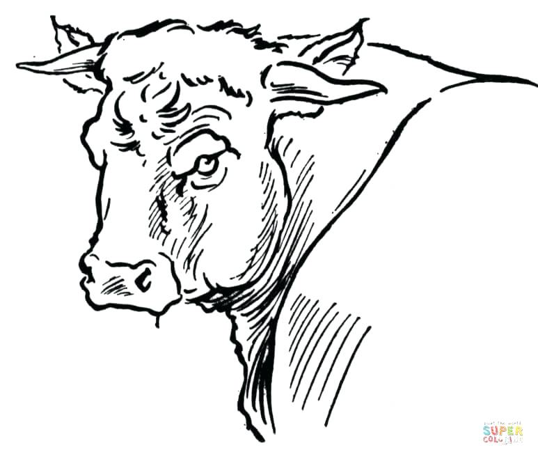 773x659 Bull Coloring Page Affan