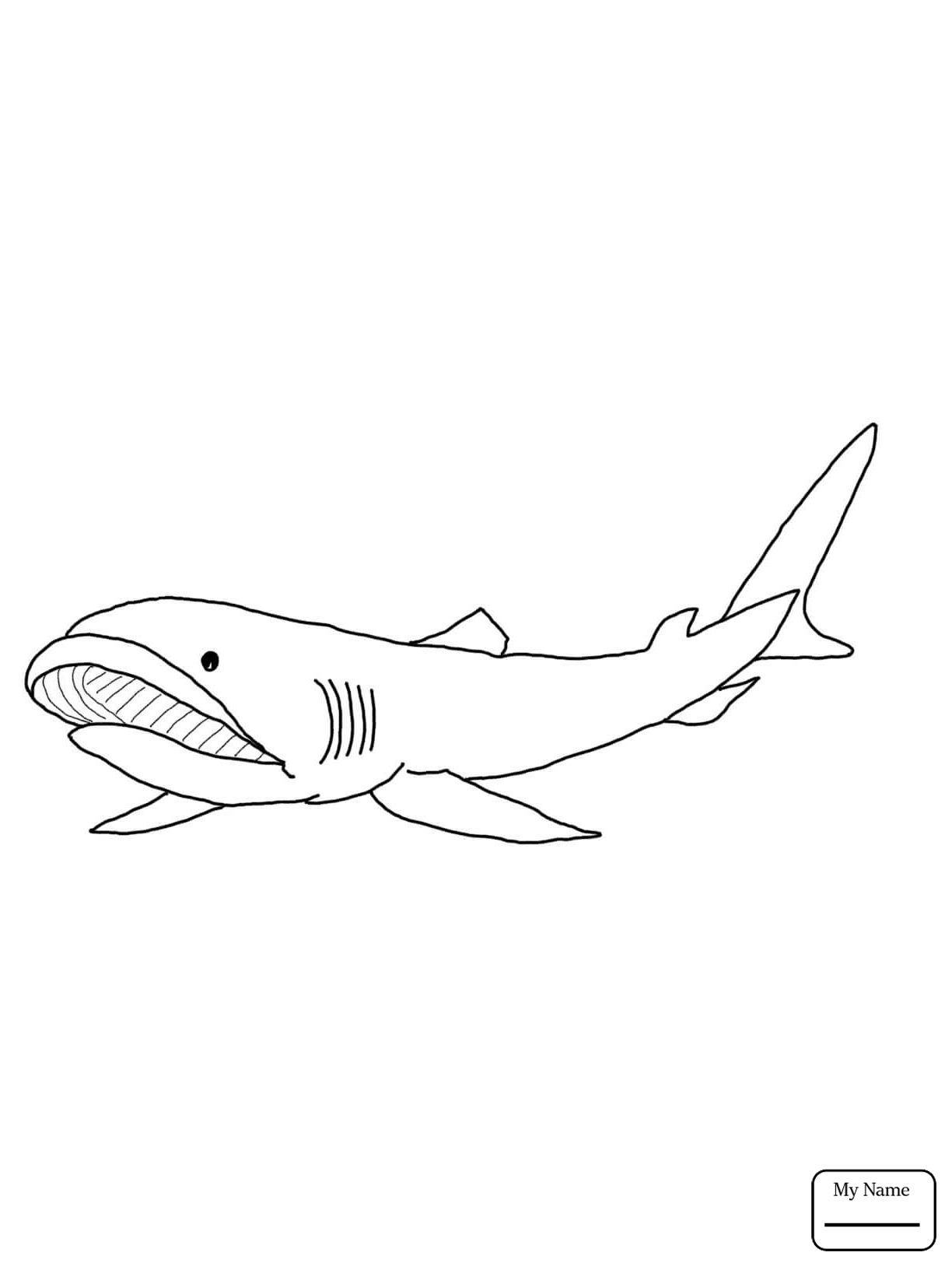Bull Shark Drawing At Getdrawings Com Free For Personal Use Bull