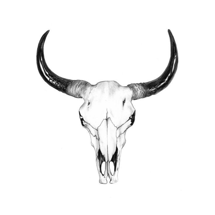Bull Skull Drawing