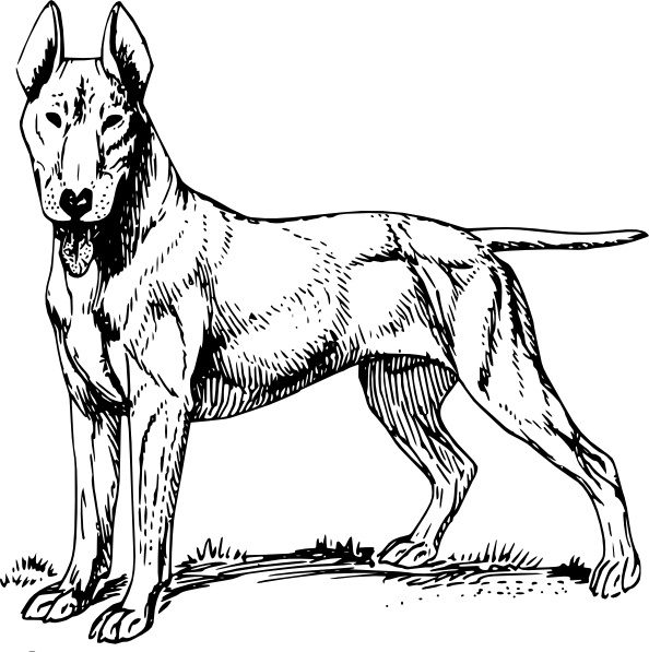 594x597 Bull Terrier Clip Art Free Vector In Open Office Drawing Svg