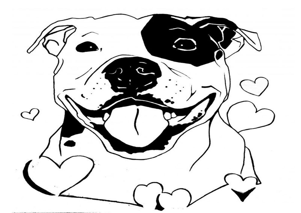 1000x708 Staffy,staffordshire Bull Terrier Drawing Iron On Transfers
