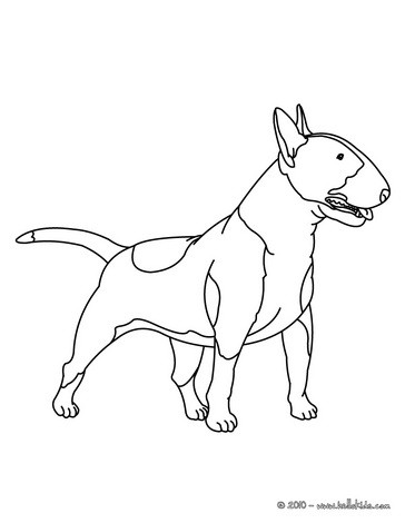 364x470 We Have Selected This Bull Terrier Coloring Page To Offer You Nice