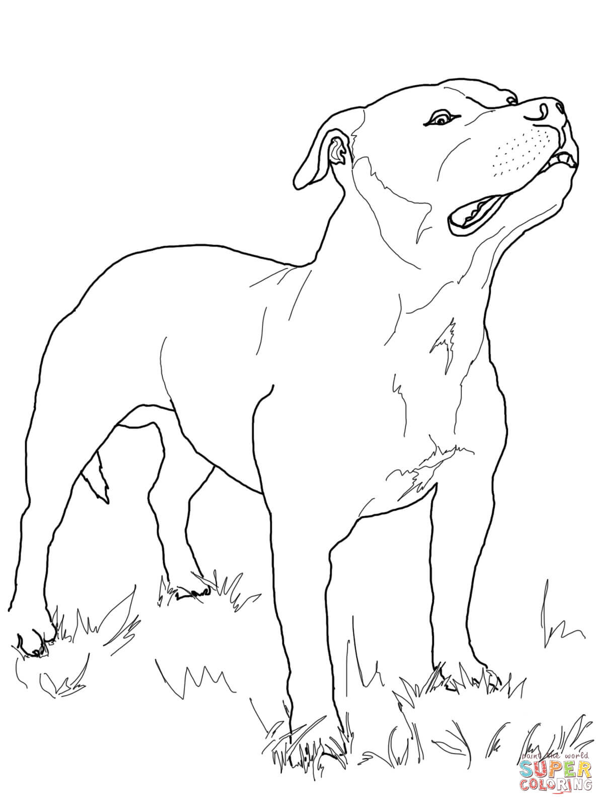 1200x1600 Bull Terrier Drawing Staffordshire Bull Terrier Coloring Page