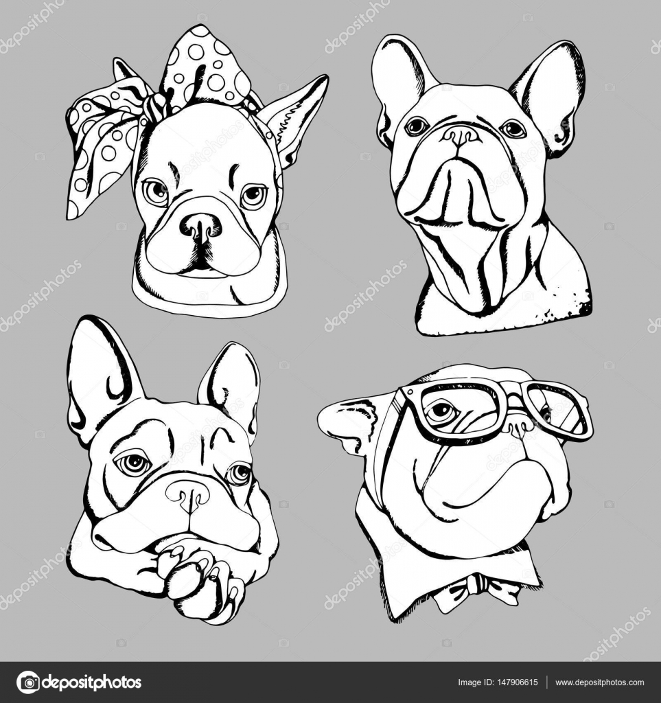963x1024 Bulldog, Dog, Animal, French, Vector, Illustration, Pet, Breed