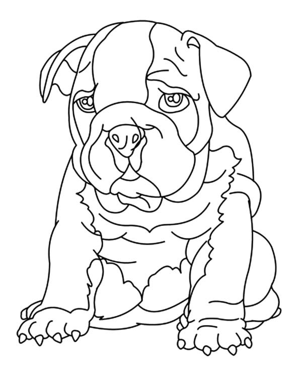 bulldog coloring pages to print | Bulldog Drawing at GetDrawings | Free download