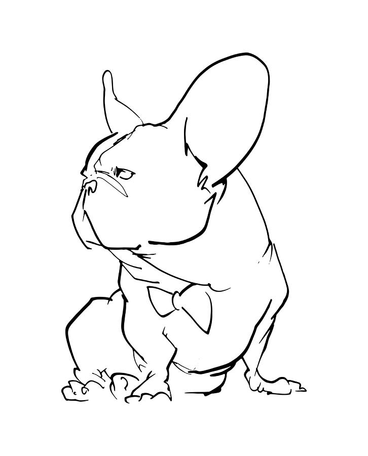 726x900 French Bulldog Gesture Sketch Drawing By John Lafree