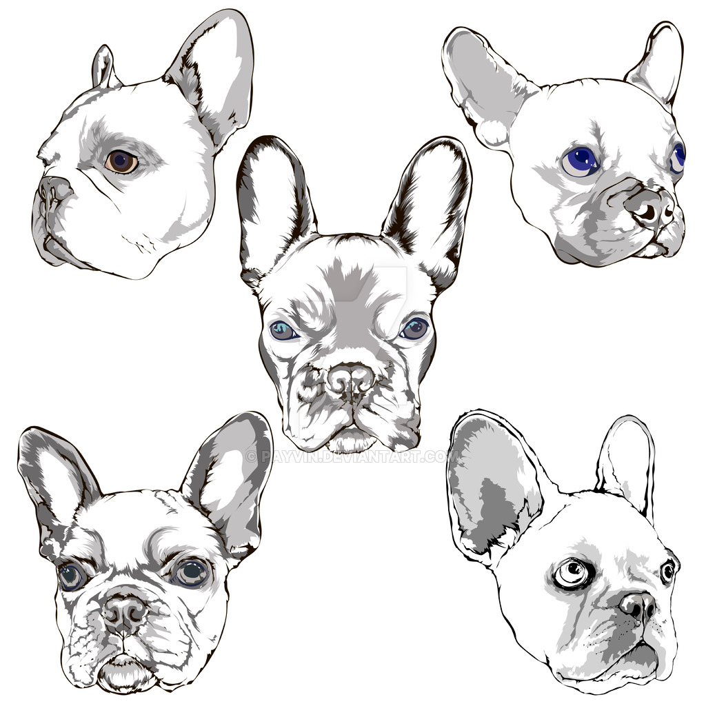 1024x1024 French Bulldog Portrait Sketch Hand Drawing Set By Payvin