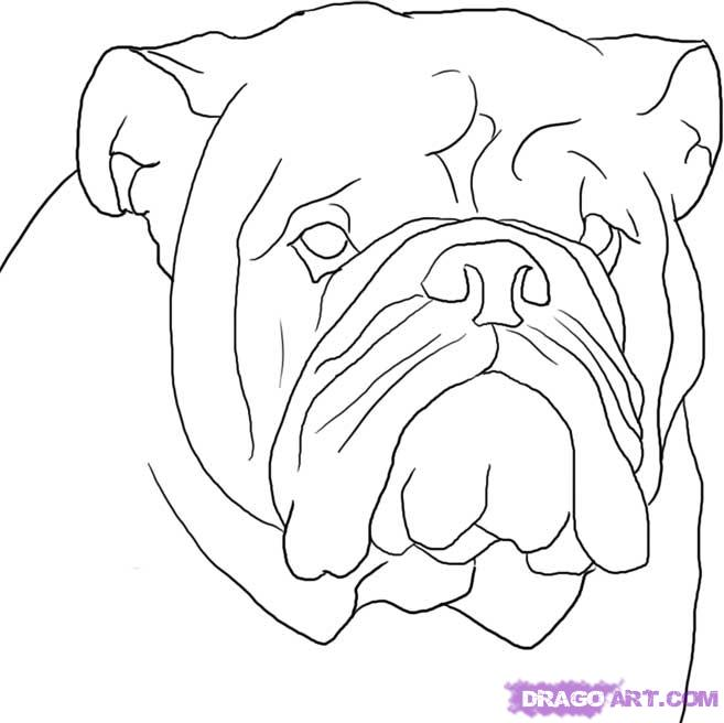 657x656 How To Draw An English Bulldog Step 8 My Stuff