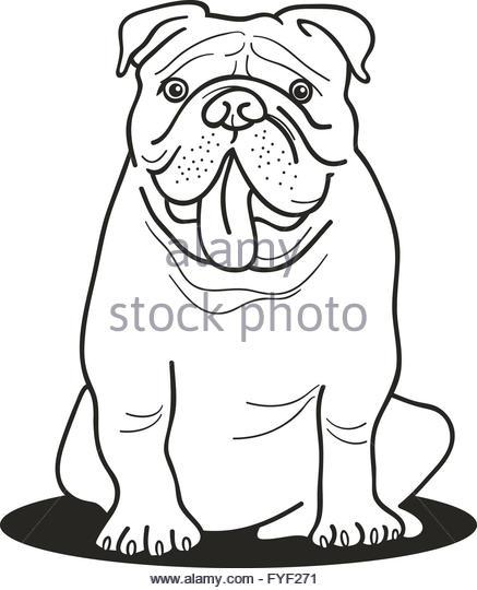 437x540 British Bulldog Drawing Stock Photos Amp British Bulldog Drawing