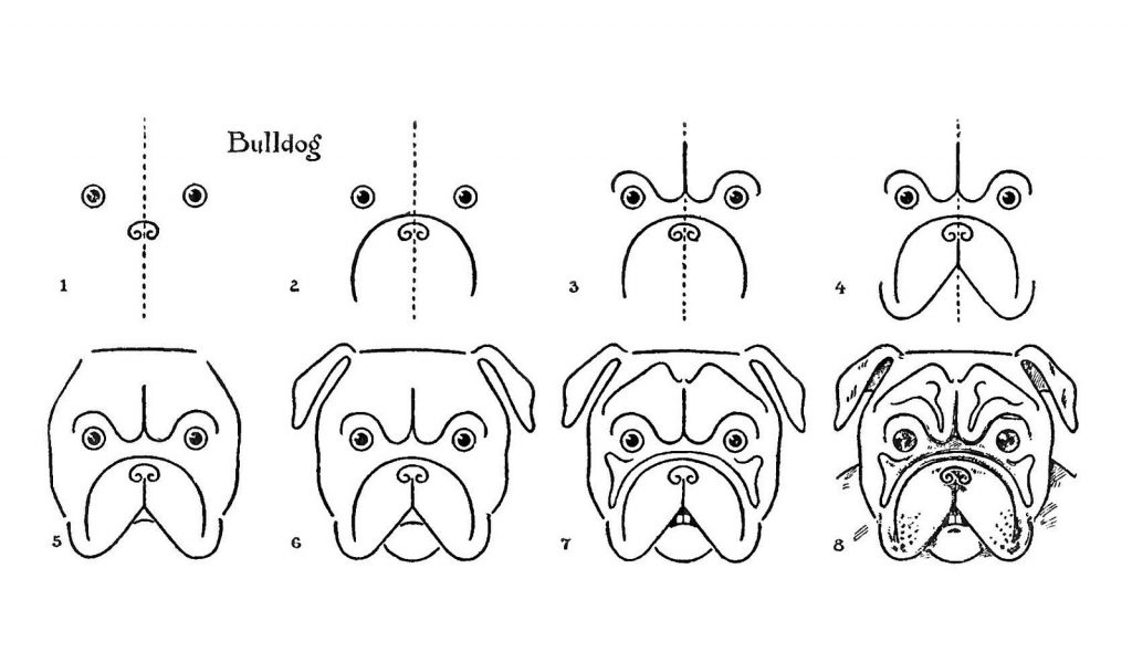 1024x600 Drawing Of A Bulldog How To Draw A Bulldog Easy Step Step Drawing