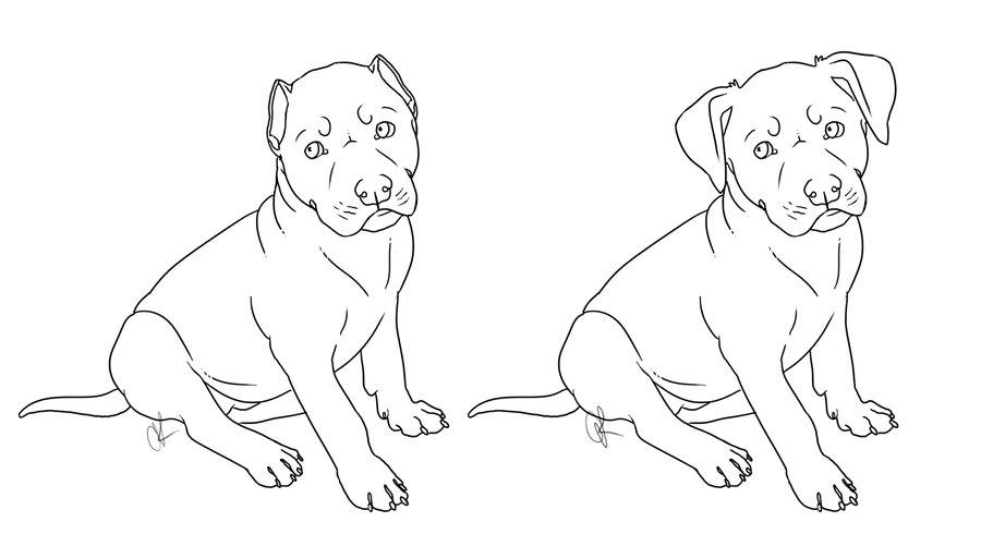 900x490 Drawn Pit Bull Draw