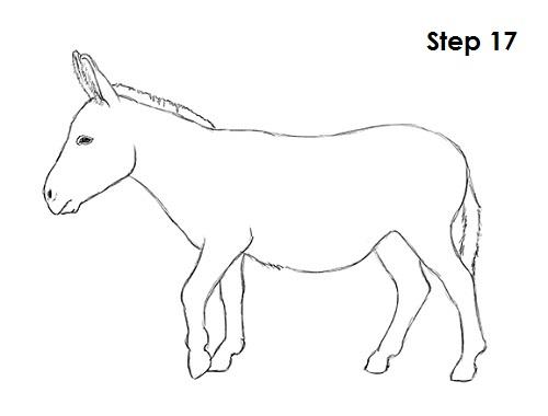 500x380 How To Draw A Donkey