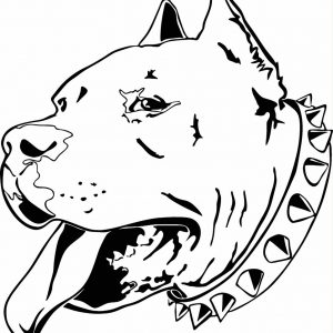 300x300 Pit Bull Drawing Adult
