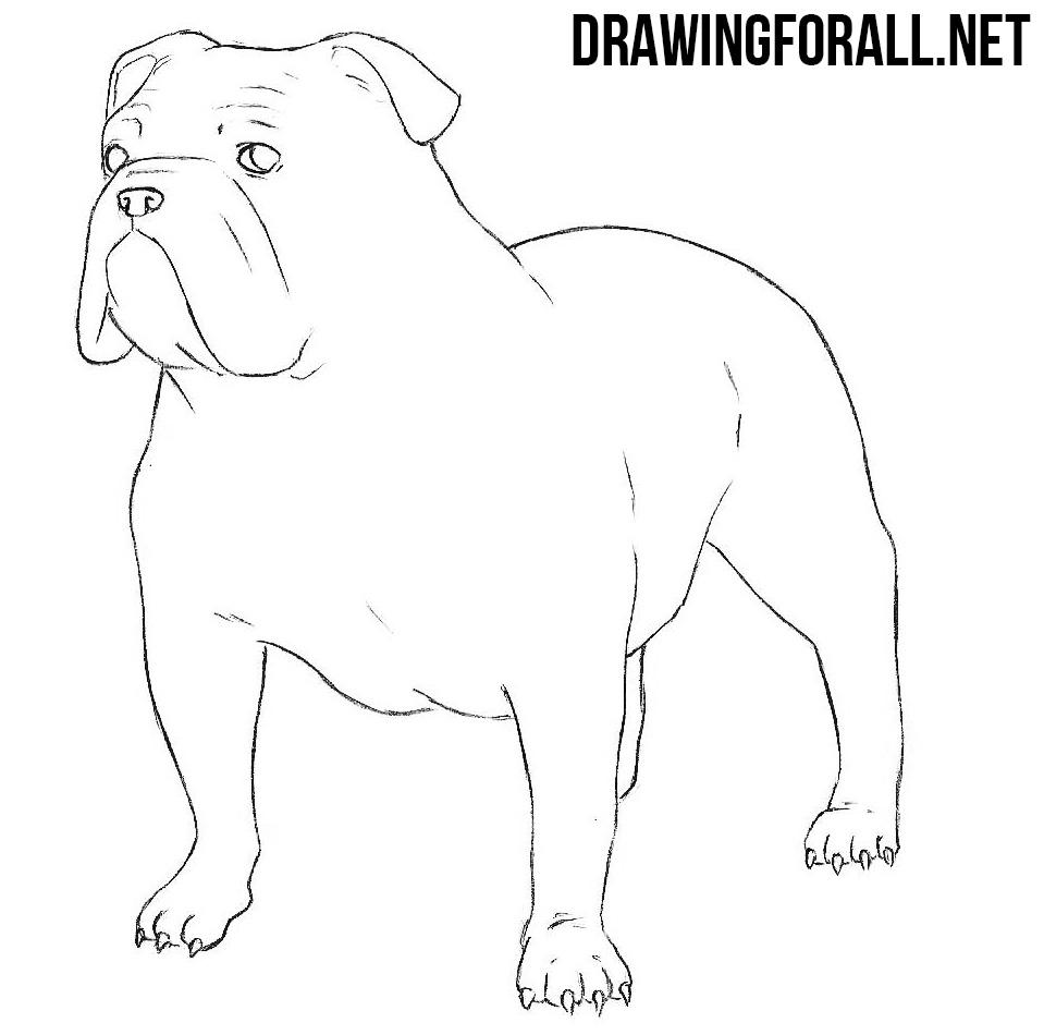 959x950 Bulldog Drawing