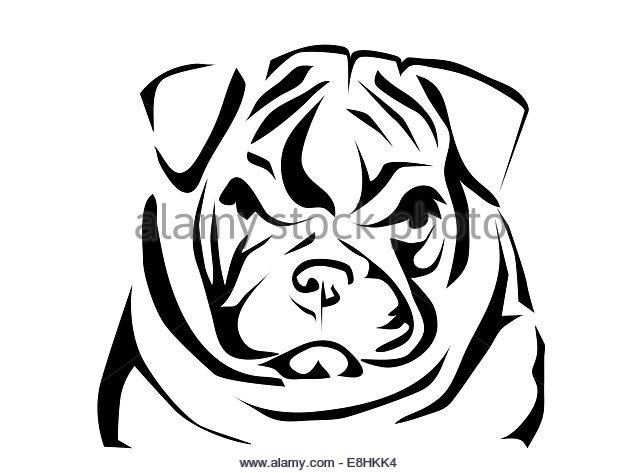 640x473 English Bulldog Black And White Stock Photos Amp Images