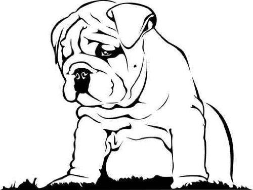500x376 English Bulldog Puppies For Sale Missouri Rockin Ridge Bullies