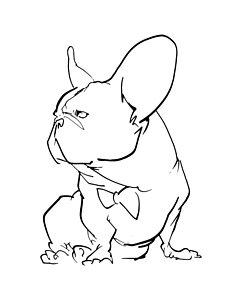242x300 French Bulldogs Drawings Fine Art America