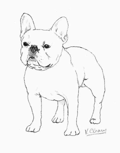 406x518 Image Result For How To Draw A Simple French Bulldog Art