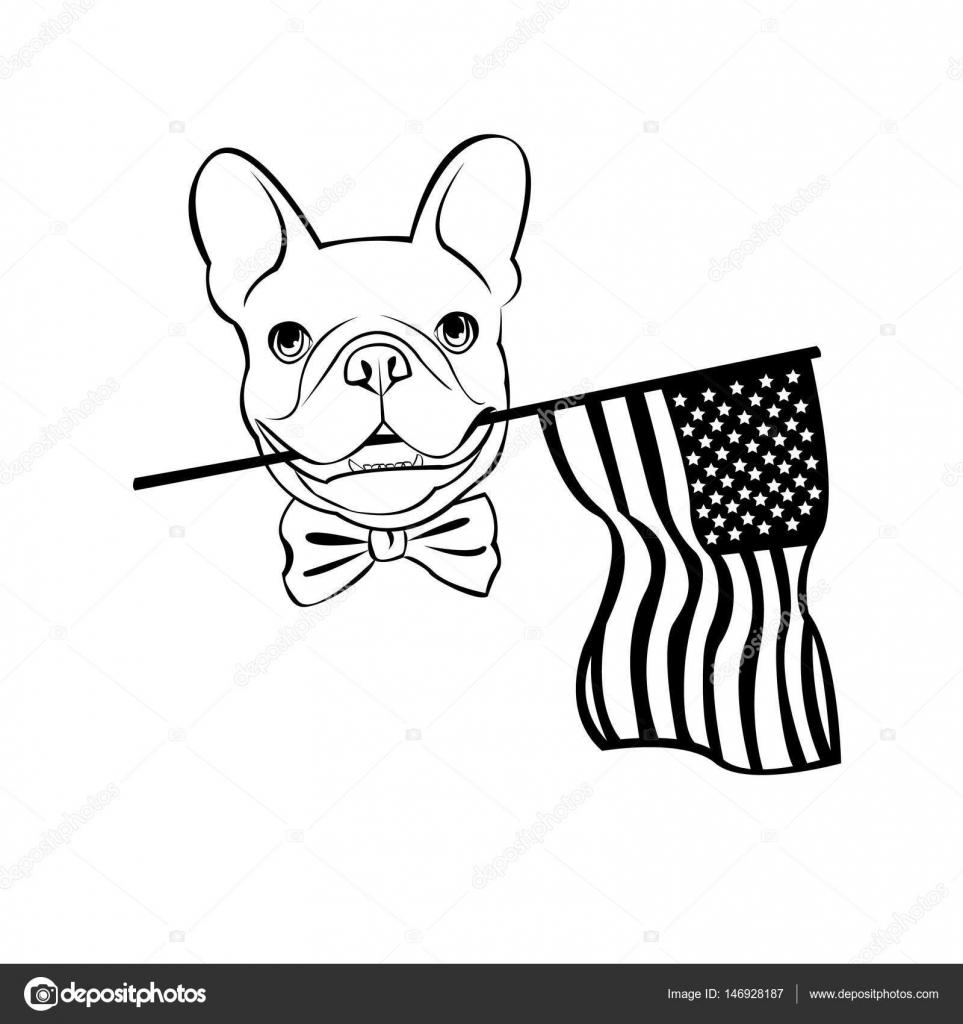 963x1024 Bulldog, Dog, Animal, French, Vector, Illustration, Pet, Breed