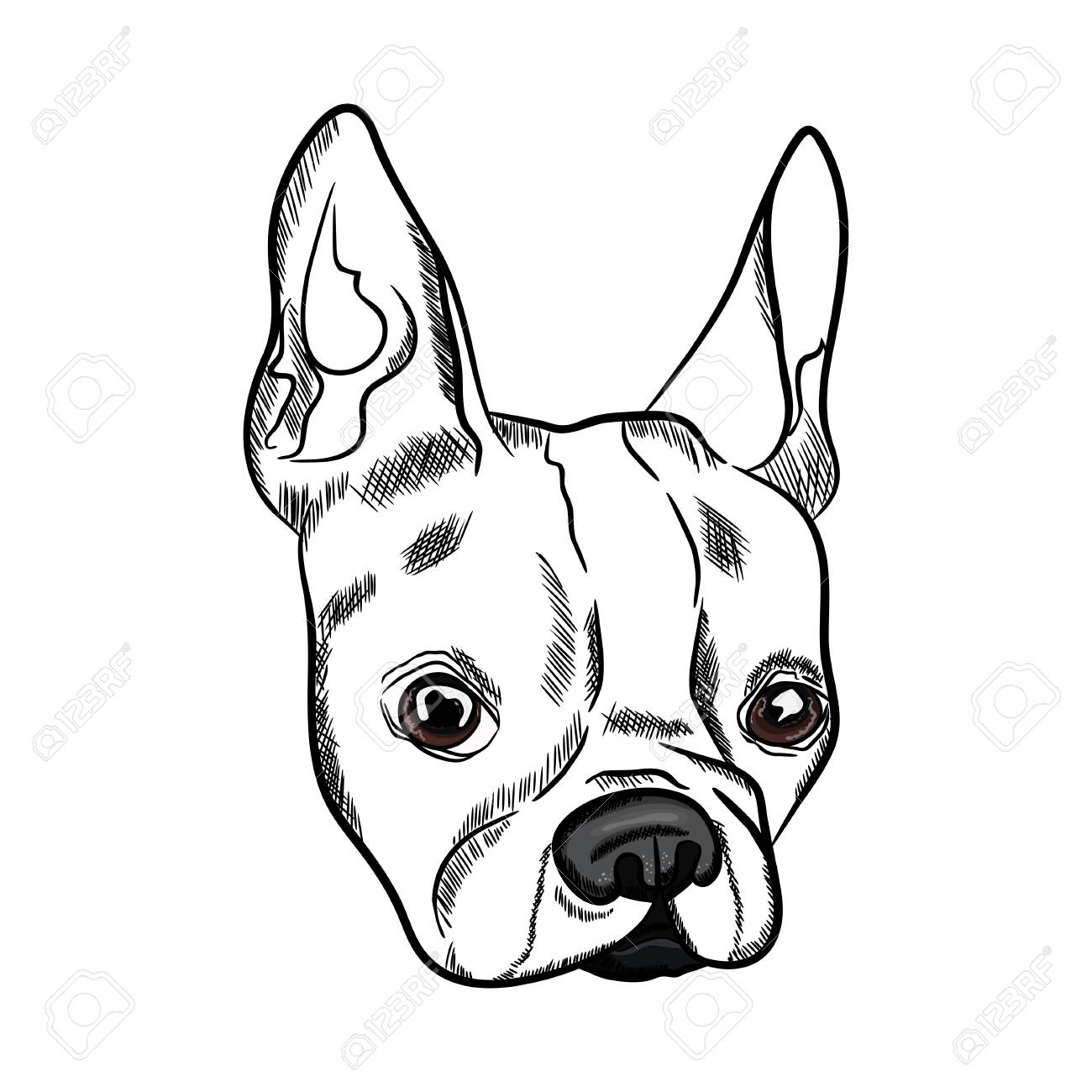 1300x1300 Outline Sketch Of French Bulldog Head On White Background. Vector