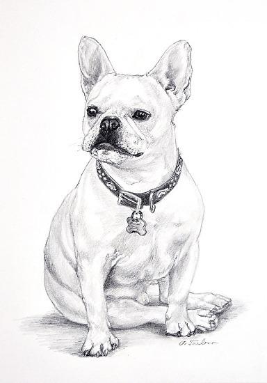 384x550 Phyllis Tarlow Portraits