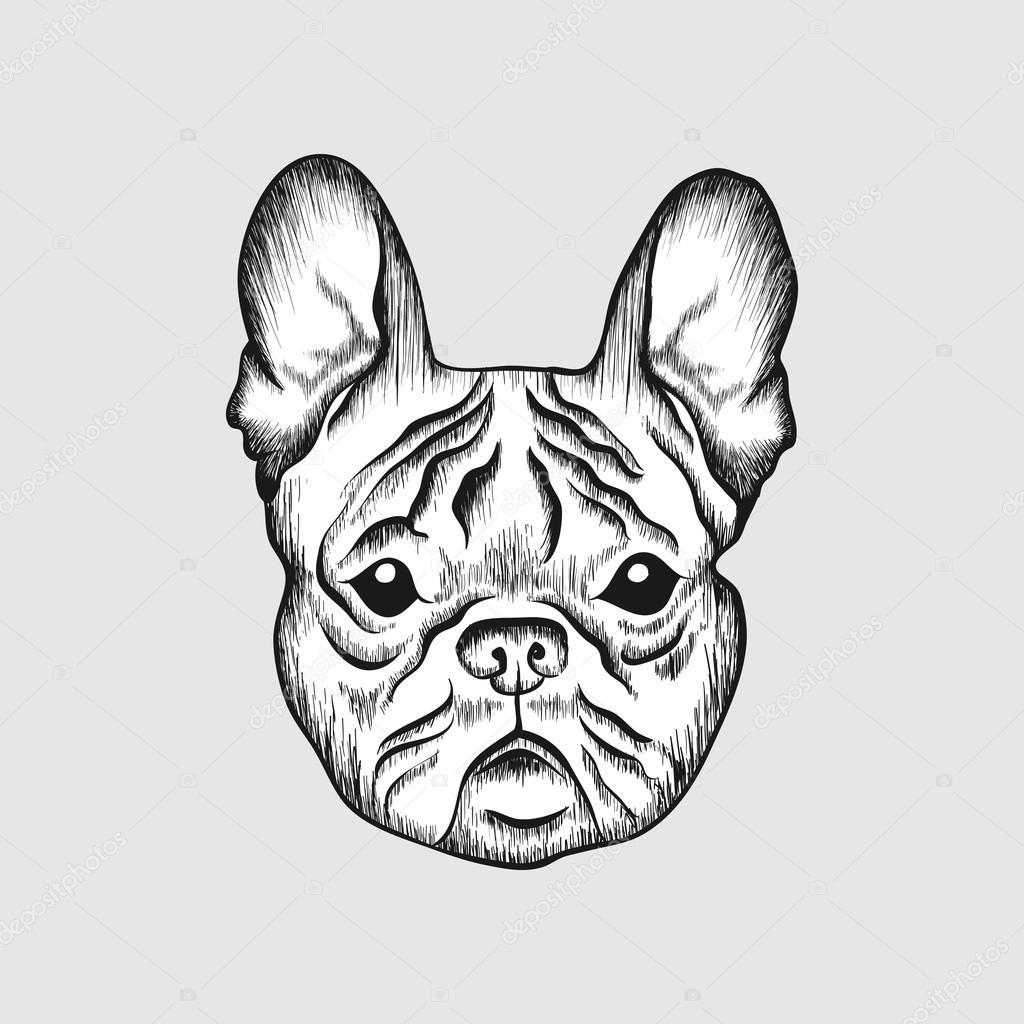 1024x1024 Sketch French Bulldog. Hand Drawn Face Of Dog Illustration
