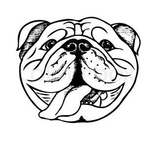 320x300 Vector Sketch Dog English Bulldog Breed Stock Vector Colourbox