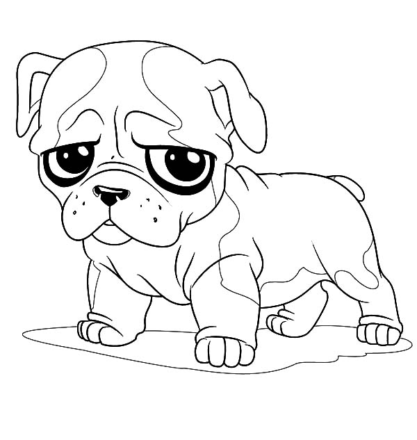 600x633 Concept Design Home Cute Bulldog Drawing Images