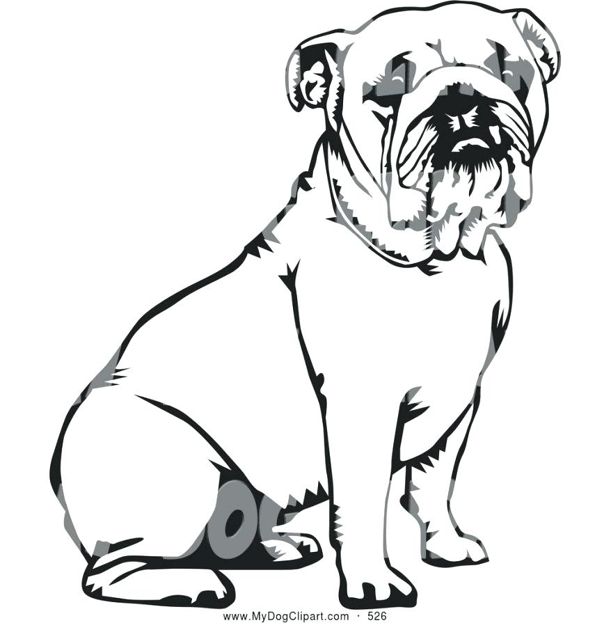 878x895 Drawn Bulldog Georgia Bulldogs 3271751