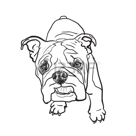 450x450 Drawing Of Young Bulldog On White Royalty Free Cliparts, Vectors