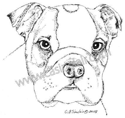 427x404 English Bulldog Puppy Dog Portraits, Dog Paintings, Dog Drawings