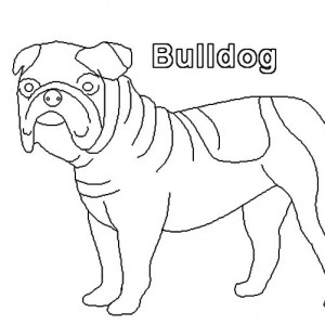 300x300 How To Draw Bulldog Coloring Pages Best Place To Color