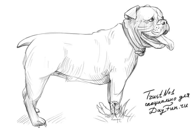 750x500 How To Draw A Bulldog Step By Step