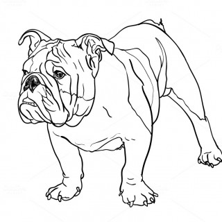 320x320 Tag For Drawing Of A Buldog Pencil Drawing Of A Resting English