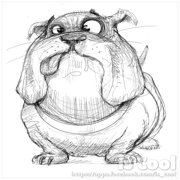 600x600 Bulldog Sketche Funny Pets Sketches, Drawings And Dog
