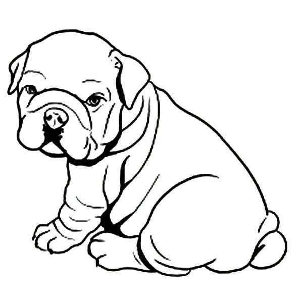 600x600 French Bulldog Coloring Pages