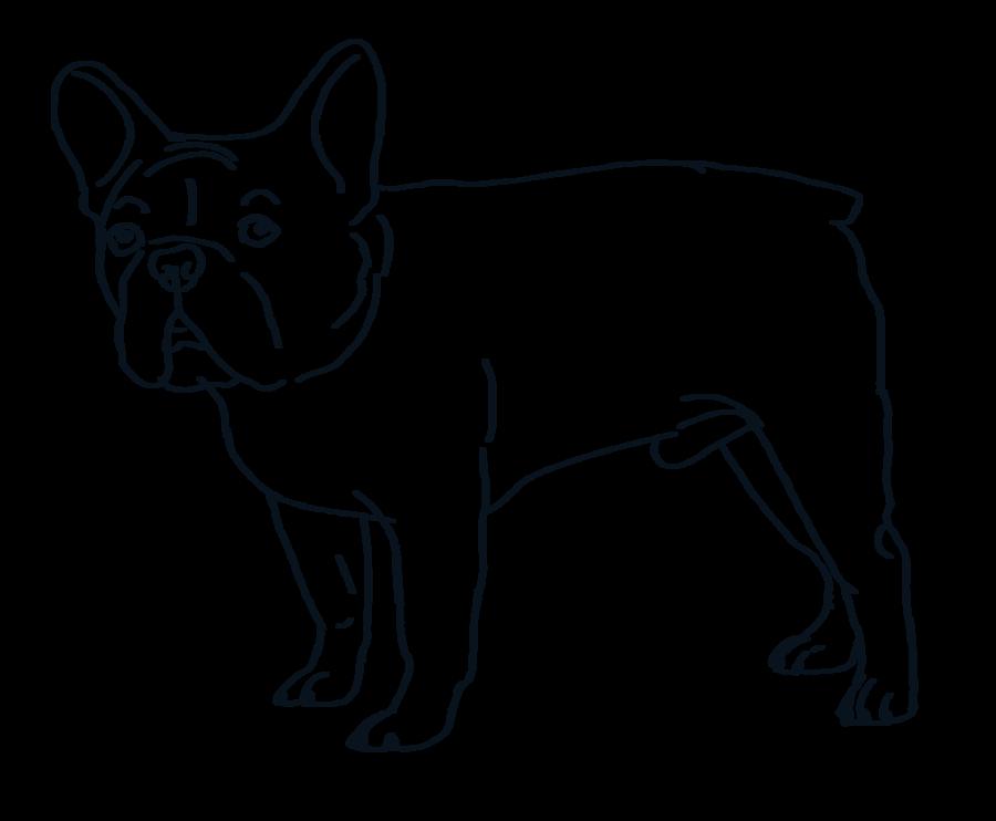 900x742 French Bulldog Lines By Valentinekennel