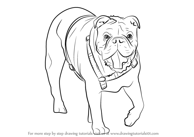 800x567 Bulldog Drawing. Bulldog Design. Bulldog Drawing By Erinkejo