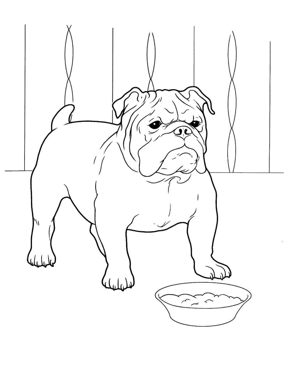 1173x1600 How To Draw A Bulldog Face Step By Step