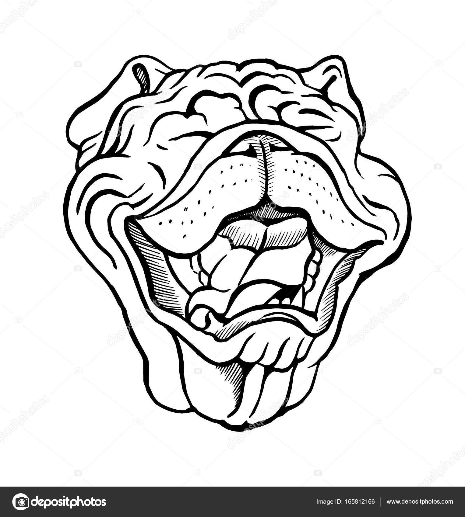 1527x1700 English Bulldog Portrait Stock Vector Minyanna