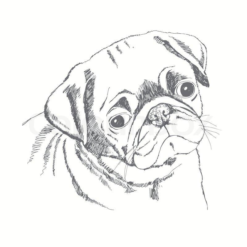 800x800 Pug Dog Face. Hand Drawn Vector Illustration. Sketch. Stock