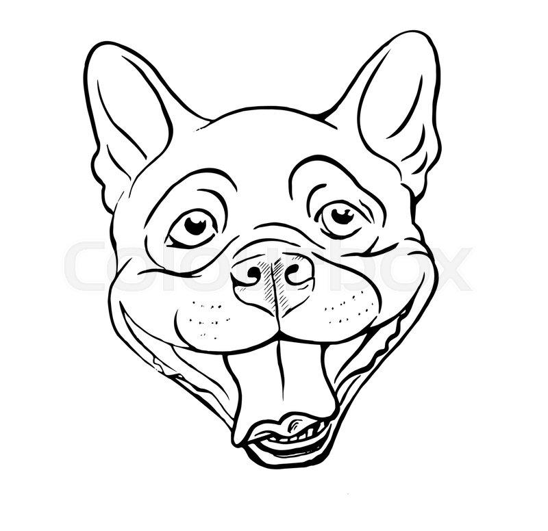 800x776 Boston Terrier, Smiling Dog Face, Portrait, Sketch, Black